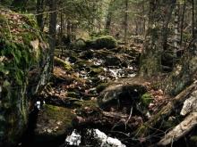 Ruisseau de la zone parc